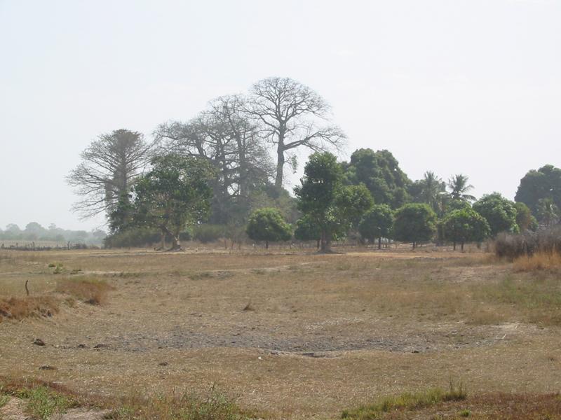 Foto Baro - der heilige Wald aus der Ferne